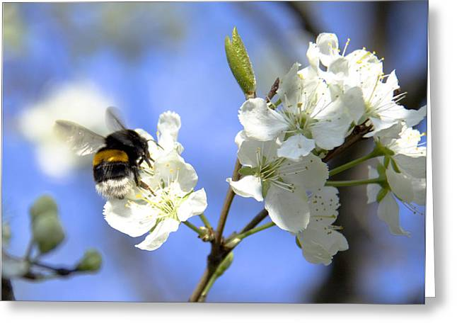 Floral Photographs Pyrography Greeting Cards -  Bumblebee Greeting Card by Svetlana Batalina