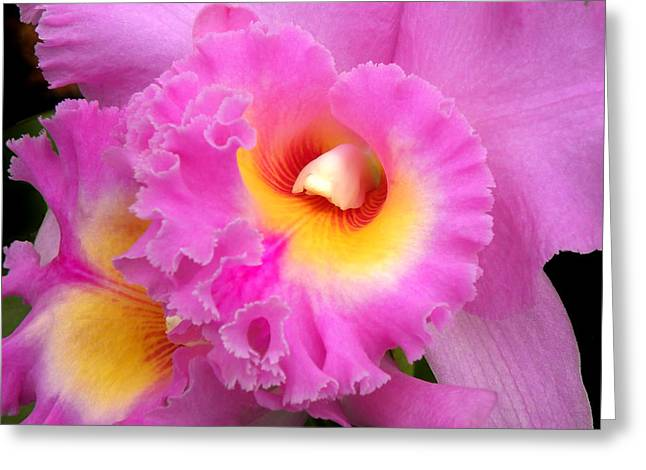 Cattleya Orchid Greeting Cards -  Cattleya Orchid 1 Greeting Card by Julie Palencia