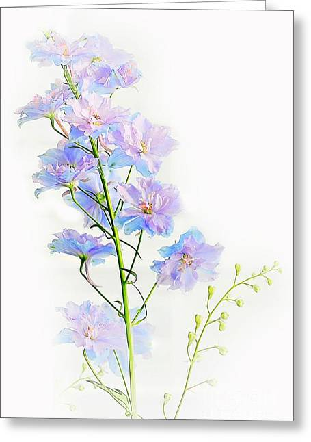Early Summer  Greeting Card by Elaine Manley