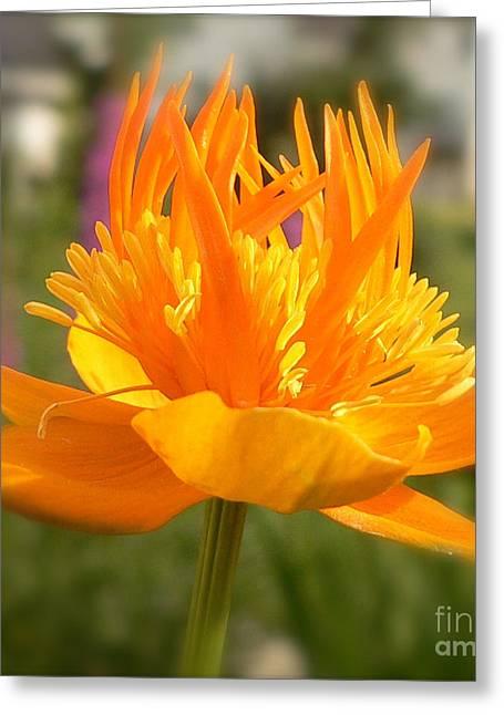 Eternal Flame Greeting Cards -  Eternal Flame  Greeting Card by Heinz G Mielke