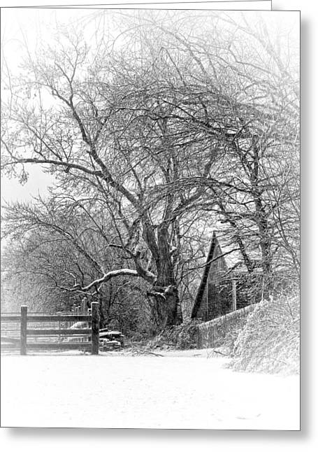 Rural Snow Scenes Greeting Cards -  Flurries Greeting Card by Robin-lee Vieira