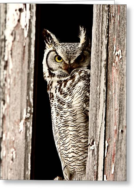Digital Image Greeting Cards -  Great Horned Owl perched in barn window Greeting Card by Mark Duffy