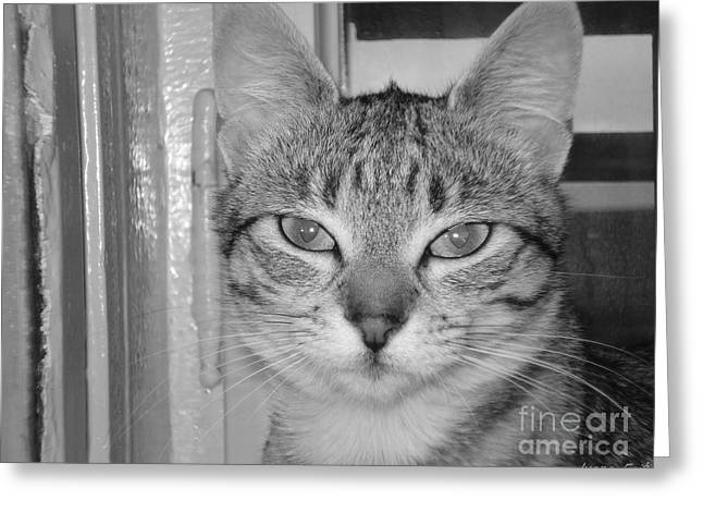 Photos Of Cats Greeting Cards -  Her make-up Greeting Card by Ivana  Egic