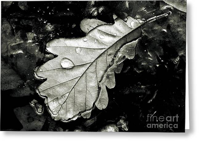 Sweating Greeting Cards -  Leaf Greeting Card by Odon Czintos