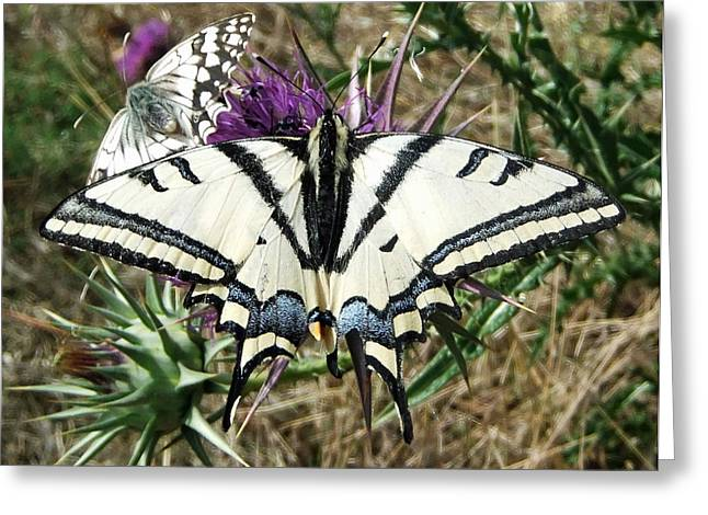 Insect Butterflies Of Lesvos Greeting Cards -  Love Is Blind Greeting Card by Eric Kempson
