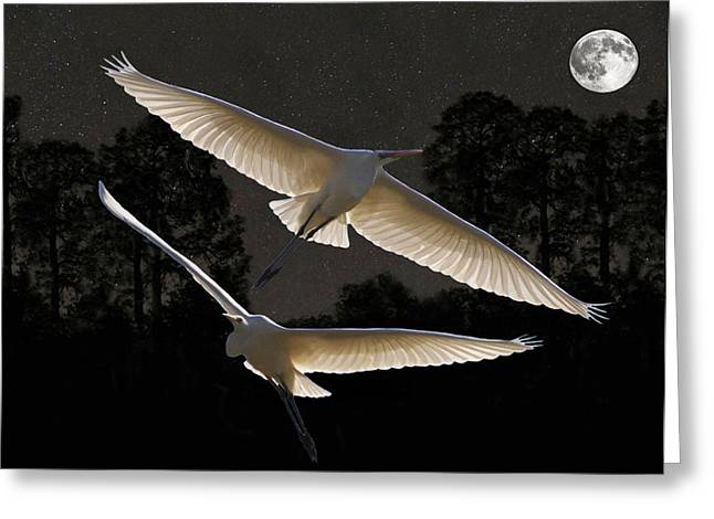 Majestic Great Egrets  Greeting Card by Eric Kempson