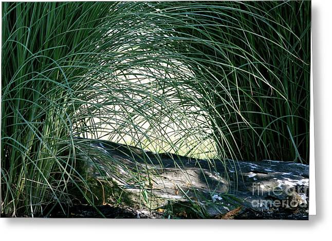 Femina Photo Art Greeting Cards -  Nature Through the Eyes of a Child Greeting Card by Maggie Vlazny