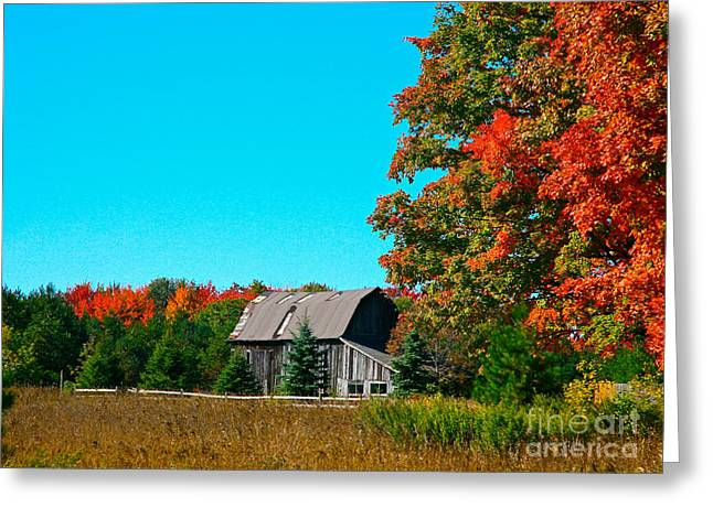 Barn Greeting Cards -  Old Barn In Fall Color Greeting Card by Robert Pearson