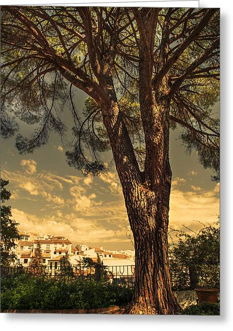 Pine Tree In The Secret Garden Greeting Card by Jenny Rainbow