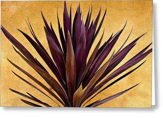 Desert Greeting Cards -  Purple Giant Dracaena Santa Fe Greeting Card by John Hansen