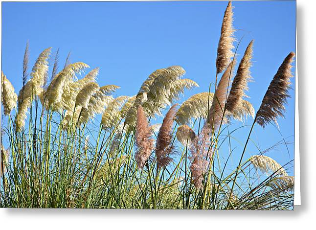 Stalks Of Grass Greeting Cards -  Remnants Of Summer Greeting Card by Fraida Gutovich