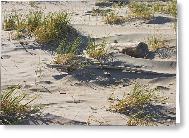 Driftwood Greeting Cards -  Sand And Driftwood Popham Beach Maine Greeting Card by Keith Webber Jr