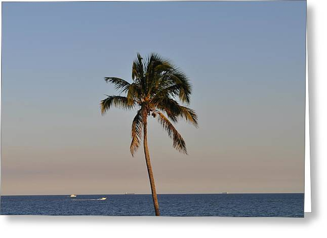 Seawatch Greeting Cards -  Sea Watch Palm Greeting Card by Tiffney Heaning