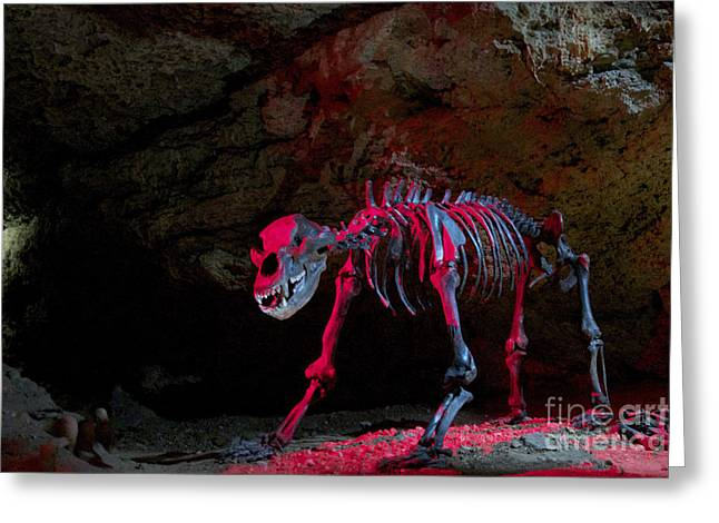 Cavern Greeting Cards -  Skeleton in Devilss Cave Greeting Card by Heiko Koehrer-Wagner
