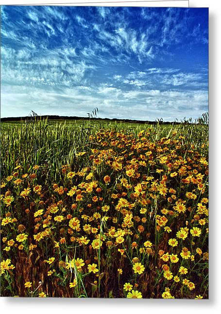 Pasture Scenes Greeting Cards -  Spring Greeting Card by Stylianos Kleanthous