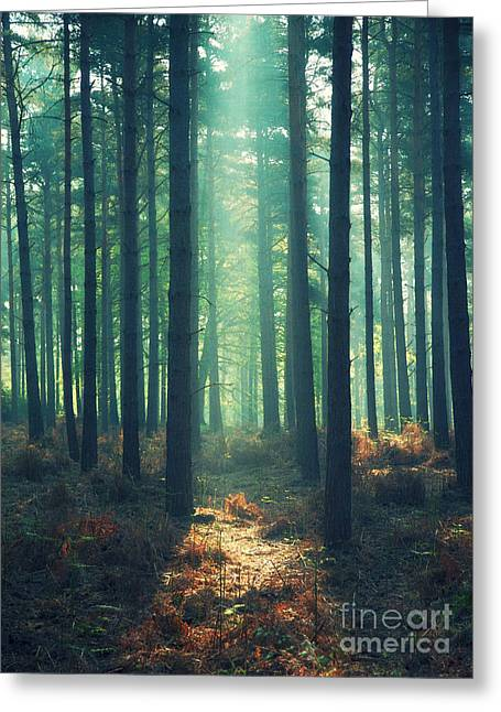 Braken Greeting Cards -  The Green Ray Greeting Card by Paul Grand