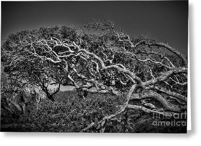 Trees Please Greeting Card by Richard Burr