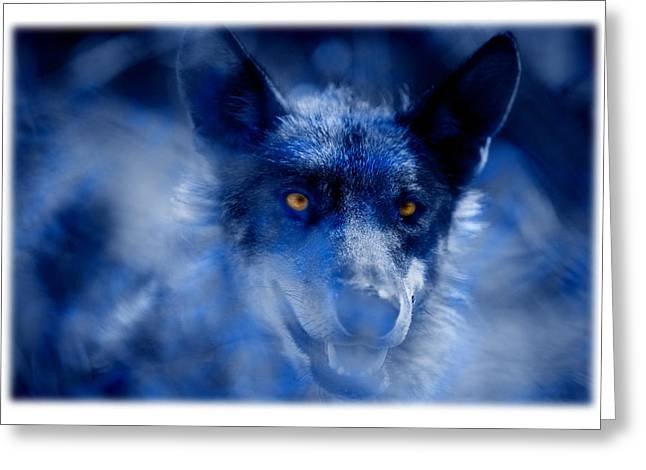 Arctic Wolf Greeting Cards -  Wolf Greeting Card by Mal Bray