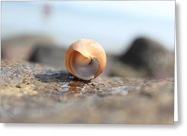 Intricate Shells Greeting Cards -  Ying yang Greeting Card by Ajay Virpariya