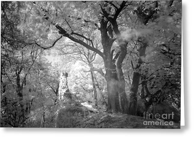 Sweating Greeting Cards -  Infra red Greeting Card by Odon Czintos