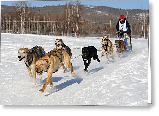 Sled Dogs Greeting Cards - 2010 Limited North American Sled Dog Race Greeting Card by Gary Whitton