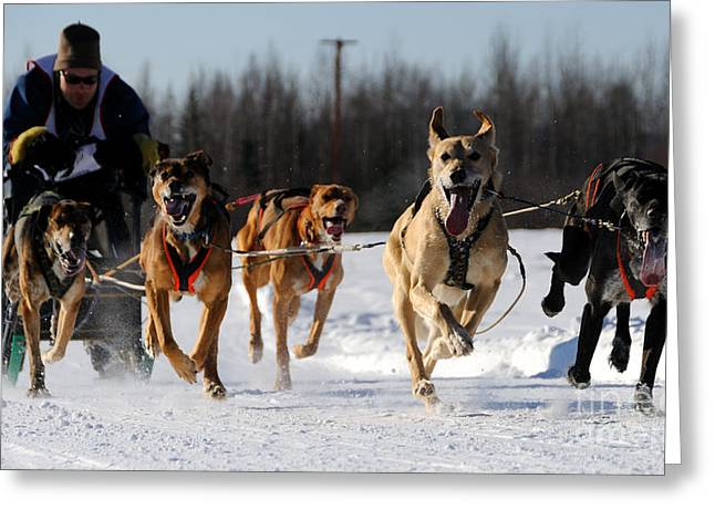 Sled Dogs Greeting Cards - 2011 Limited North American Sled Dog Race Greeting Card by Gary Whitton