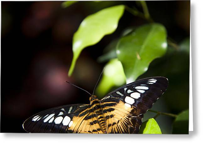 A Butterfly Perches On A Leaf Greeting Card by Taylor S. Kennedy