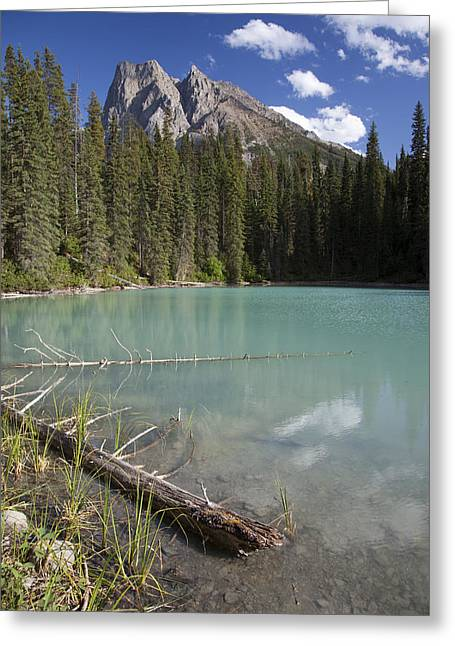 Pond In Park Greeting Cards - A Calm Pond With Mount Burgess Greeting Card by Taylor S. Kennedy