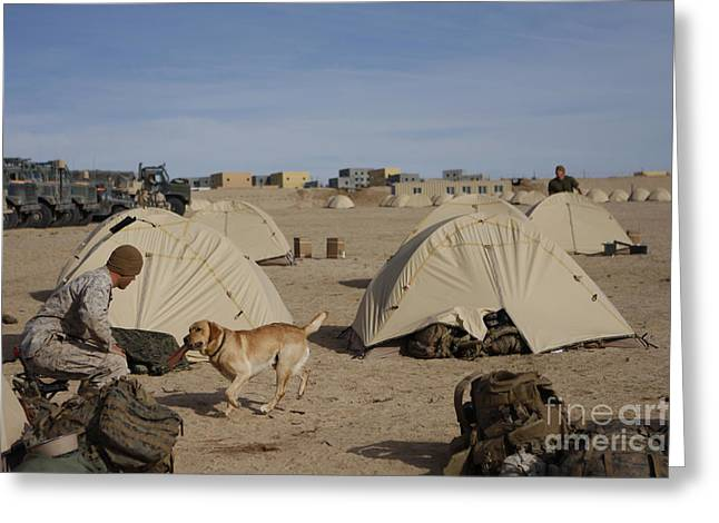 Dog Handler Greeting Cards - A Dog Handler And His Military Working Greeting Card by Stocktrek Images