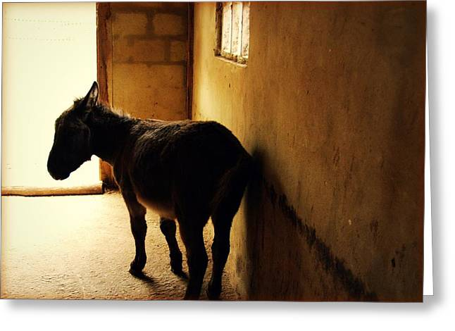Reflections Of Shadows Greeting Cards - A Donkey Named Kong Greeting Card by Danny Van den Groenendael