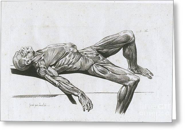 Historical Images Greeting Cards - A Flayed Cadaver Greeting Card by Science Source