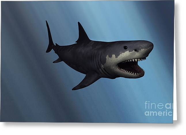 Sea Life Digital Art Greeting Cards - A Megalodon Shark From The Cenozoic Era Greeting Card by Mark Stevenson
