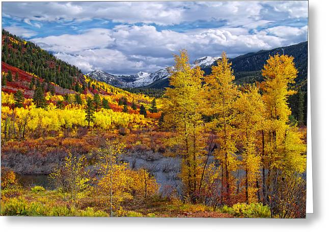 Aspens In Fall Greeting Cards - A Symphony of Colors Greeting Card by Tim Reaves
