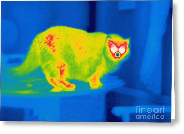 Thermogram Greeting Cards - A Thermogram Of A Long Haired Cat Greeting Card by Ted Kinsman
