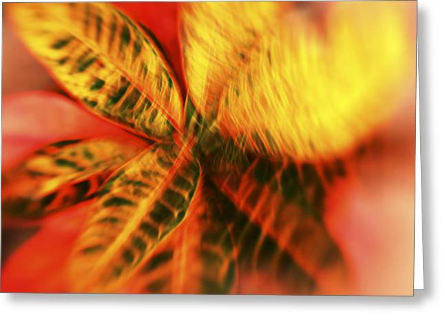 Vince Greeting Cards - Abstract Croton Plant Greeting Card by Vince Cavataio - Printscapes
