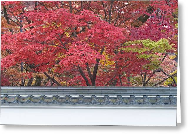 Kyoto Greeting Cards - Acer Trees Acer Palmatum. Autumn Color Greeting Card by Rob Tilley