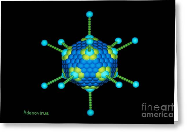 Respiratory Greeting Cards - Adenovirus Greeting Card by NEI / Science Source