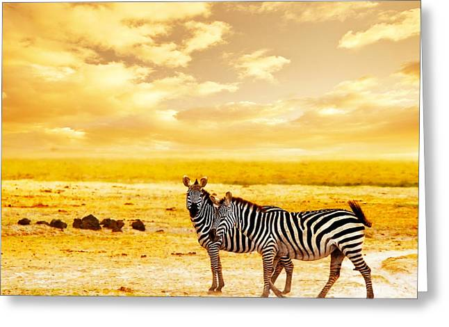 Scenic Drive Greeting Cards - African wild zebras Greeting Card by Anna Omelchenko