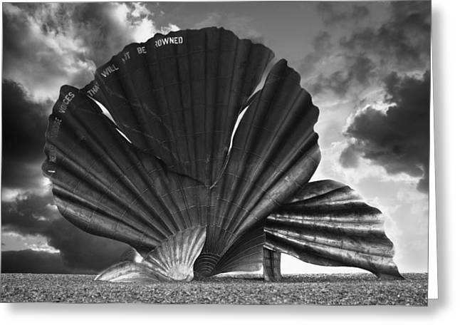 Aldeburgh Scallop Greeting Card by Darren Burroughs