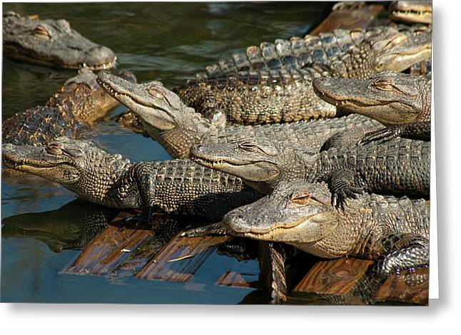 Alligator Pool Party Greeting Card by Carolyn Marshall