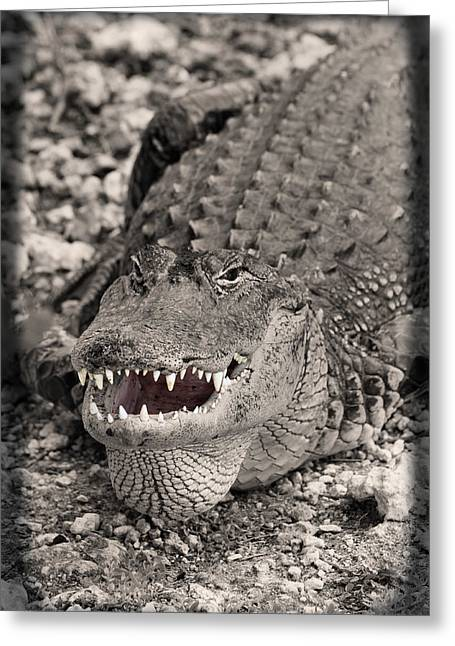 Bask Greeting Cards - American Alligator Greeting Card by Rudy Umans