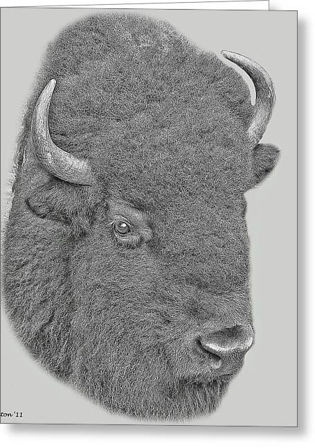 American Bison Greeting Cards - American Bison Greeting Card by Larry Linton