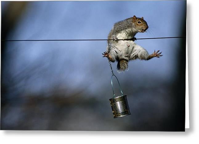 An Eastern Gray Squirrel Sciurus Greeting Card by Chris Johns