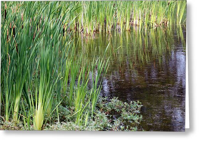 Tony Knowles Coastal Trail Greeting Cards - Anchorage in Summer Greeting Card by Harvey Barrison