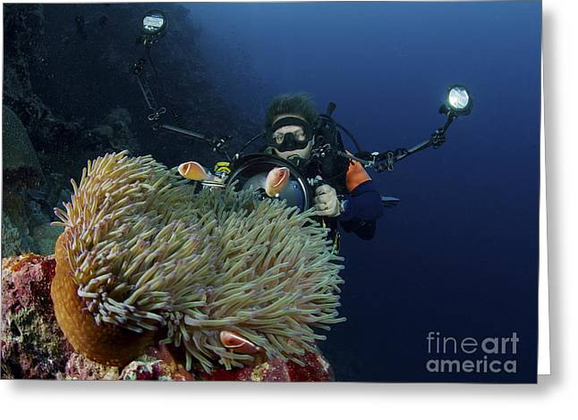 Pomacentridae Greeting Cards - Anemonefish In A Brown Anemone Greeting Card by Mathieu Meur