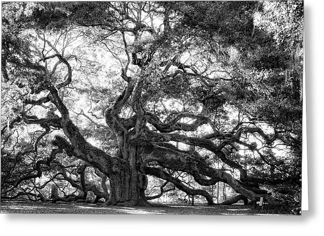 Gnarly Greeting Cards - Angel Oak Greeting Card by Lynne Jenkins