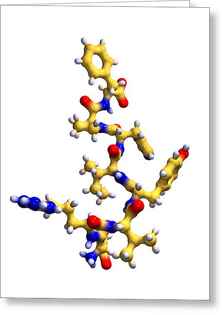 Polypeptide Greeting Cards - Angiotensin Ii, Polypeptide Hormone Greeting Card by Dr Mark J. Winter