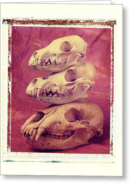 Transfer Greeting Cards - Animal Skulls Greeting Card by Garry Gay