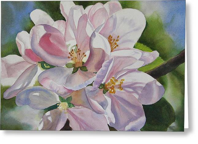 Apple Blossom Paintings Greeting Cards - Shadowed Apple Blossoms Greeting Card by Sharon Freeman
