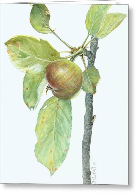 Apple Branch Greeting Card by Scott Bennett
